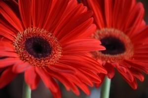 Cięte Kwiaty W Domu Idealne Mieszkanie